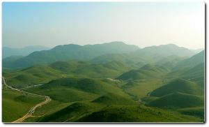 chińska zielona herbata
