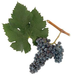 wino bezalkoholowe szczepu merlot