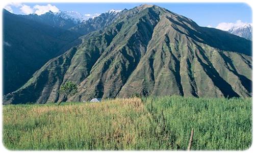 himalajski ryż basmati