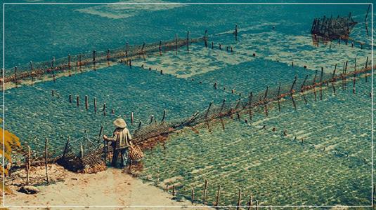 umibudo sea farm