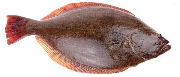 frozen halibut fish
