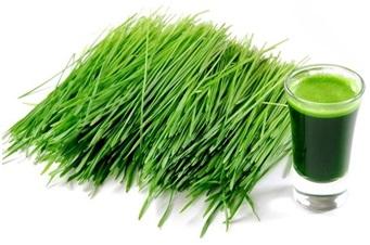 zielony jeczmień