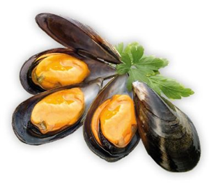 Cooked, frozen mussels in Shell